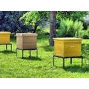 Ульи для пчел деревянные фото