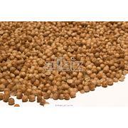 Семена кориандра фото