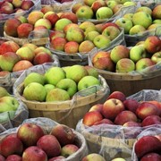 Яблоки в Молдове фото