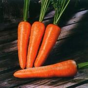 Семена моркови Болтекс фото