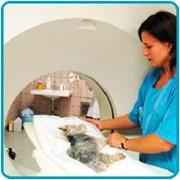 Ветеринарные томографы фото