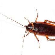 Уничтожение тарака, избавиться тараканов фото
