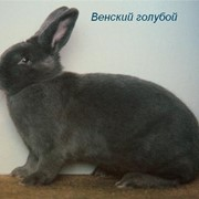 Бизнес план по разведению кроликов фото