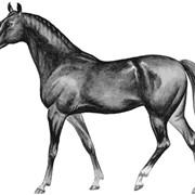 Разведение спортивных лошадей