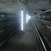 Светодиодное освещение в птицеводстве фото
