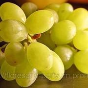 Виноградной косточки рафинированное