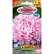 Семена цветов Астра Александрия серебристо-розовая фото