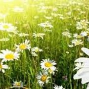 Безхлорное экологически чистое комплексное минеральное удобрение фото