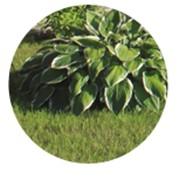 Посадка растений фото