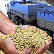 Продажа зерновых фото