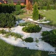 Хвойный садик 2 фото