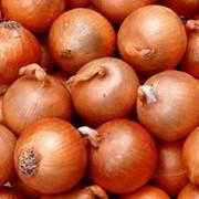 Экспорт овощей фото