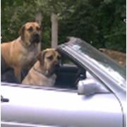 Страхование животных фото