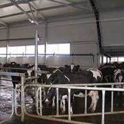 Фермы животноводческие фото