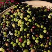 Оливки с косточками и без косточки, Греческие оливки и маслины. фото