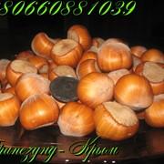 Крупноплодный фундук Трапезунд фото