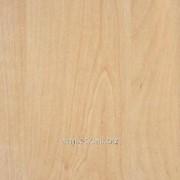 Кромка с клеем Береза - R5717 фото