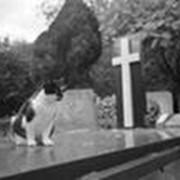 Организация похорон животных фото