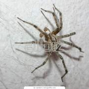 Уничтожение пауков фото