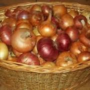 Овощи свежие. Выращивание и реализация. фото