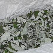 Листья малины засушенные фото