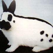 Кролик бабочка фото