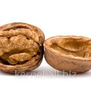 Ядра орехов фото