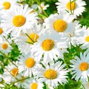 Фотообои артикул FL-0123 фото