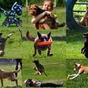 Дрессировка и воспитание собак фото