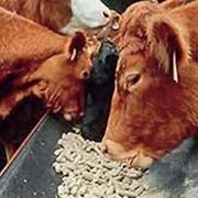 Комбикорм для крупнорогатого скота КК-60-1 фото