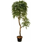 Искусственное дерево Береза Далли (Код товара: 52435) фото
