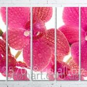 Модульна картина на полотні Рожева орхідея код КМ100150(150)-070 фото
