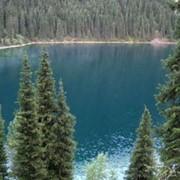 Кольсайские озера и Кайынды фото