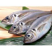 Рыба морская в ассортименте фото