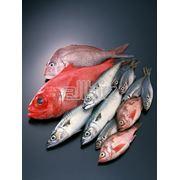 Рыба морская фото