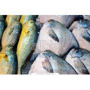 Рыбная продукция в ассортименте фото
