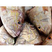 Рыба свежемороженая фотография