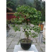 Посадка садовых растений фото