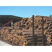 Первичная обработка и сушка древесины фото