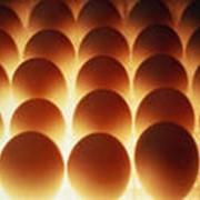 Яйца утиные инкубационные Башкирская цветная фото