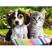 Лечение инфекционных заболеваний у животных фото