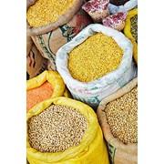 Культуры зерновые, от производителя. фото