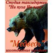 Видеокурс по изготовлению чучела медведя фото