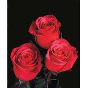 Доставка синих цветов 5456366 заказ цветов в с петербурге