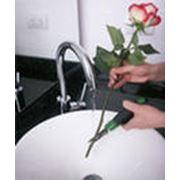 Цветы срезанные фото