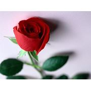 Купить розы в мокшане цены кольцо мужчине в подарок