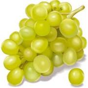Средство для обработки виноградных саженцев фото