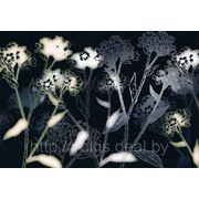 Фотообои на стену Черно белые цветы Komar 8-898 Bellezza фото