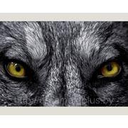"""Фотообои на флизелине """"Волчий взгляд"""""""
