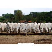 Скотоводческие и птицеводческие фермы. фото